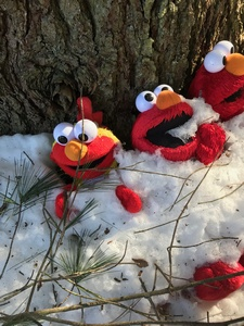 tree with multiple Elmo dolls attached