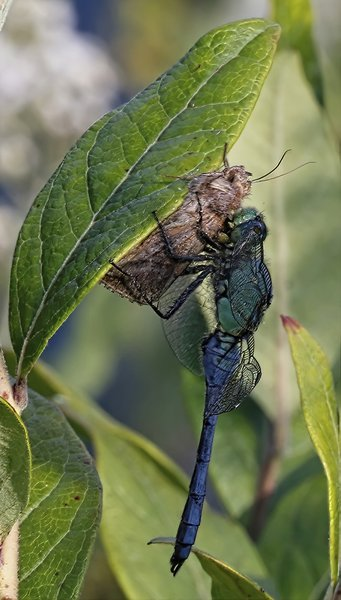 moth and dragonfly